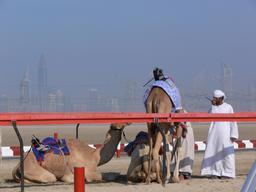 Course de robots à dos de chameau. Source : http://data.abuledu.org/URI/58e9da4d-course-de-robots-a-dos-de-chameau