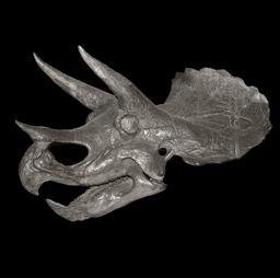 Crâne de Triceratops. Source : http://data.abuledu.org/URI/54b2dfc6-crane-de-triceratops