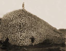 Crânes de bisons utilisés comme engrais en 1870. Source : http://data.abuledu.org/URI/54d0fdba-cranes-de-bisons-utilises-comme-engrais-en-1870
