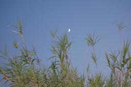 Croissant de lune. Source : http://data.abuledu.org/URI/59097c6a-croissant-de-lune
