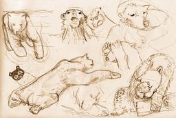 Croquis d'ours polaires. Source : http://data.abuledu.org/URI/54eceab9-croquis-d-ours-polaires