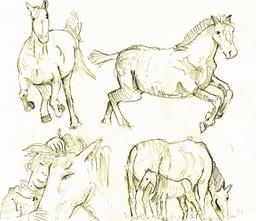 Croquis de chevaux. Source : http://data.abuledu.org/URI/54eced78-croquis-de-chevaux
