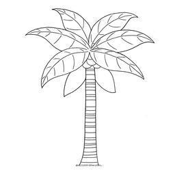Croquis de cocotier. Source : http://data.abuledu.org/URI/54007143-croquis-de-cocotier