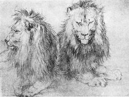 Croquis de lions. Source : http://data.abuledu.org/URI/5072b294-croquis-de-lions