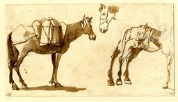 Croquis de mules. Source : http://data.abuledu.org/URI/517e64b2-croquis-de-mules
