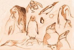 Croquis de pingouins. Source : http://data.abuledu.org/URI/54ece944-croquis-de-pingouins