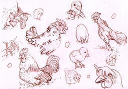 Croquis de poules et poussins. Source : http://data.abuledu.org/URI/54ecee8f-croquis-de-poules-et-poussins