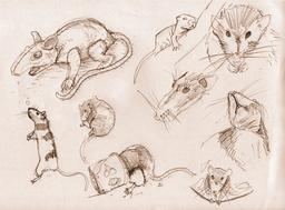 Croquis de rats. Source : http://data.abuledu.org/URI/54ece9e2-croquis-de-rats
