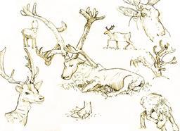 Croquis de rennes. Source : http://data.abuledu.org/URI/54ecef61-croquis-de-rennes