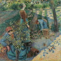 Cueillette des pommes. Source : http://data.abuledu.org/URI/516dba15-cueillette-des-pommes