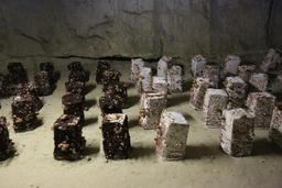 Culture de champignons dans les caves de Bourré. Source : http://data.abuledu.org/URI/56533d9e-culture-de-champignons-dans-les-caves-de-bourre