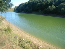 Cyanobactéries au barrage de Haute-Vilaine. Source : http://data.abuledu.org/URI/55321423-cyanobacteries-au-barrage-de-haute-vilaine