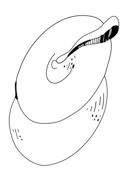Cymbales. Source : http://data.abuledu.org/URI/50253f97-cymbales