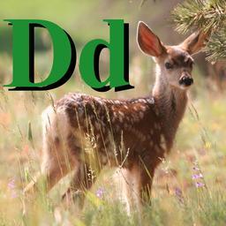 D pour le Daim. Source : http://data.abuledu.org/URI/5331ff0e-d-pour-le-daim