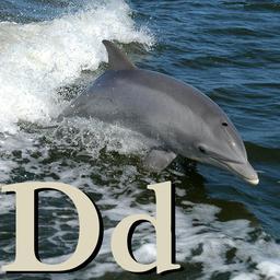 D pour le Dauphin. Source : http://data.abuledu.org/URI/5331ff83-d-pour-le-dauphin