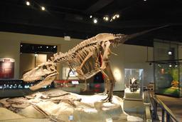 Daspletosaurus (de la famille des Tyrannosauridés). Source : http://data.abuledu.org/URI/47f50e0d-daspletosaurus-de-la-famille-des-tyrannosaurides-