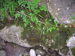 Début de pédogénèse sur pierre calcaire. Source : http://data.abuledu.org/URI/509da146-debut-de-pedogenese-sur-pierre-calcaire