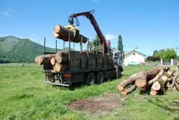 Déchargement de billes de bois à Lézignan. Source : http://data.abuledu.org/URI/5156a6c0-dechargement-de-billes-de-bois-a-lezignan