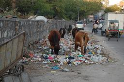 Déchets en bord de rue en Inde. Source : http://data.abuledu.org/URI/510e849b-dechets-en-bord-de-rue-en-inde