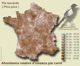 Densité de la pie bavarde en France. Source : http://data.abuledu.org/URI/588ca2c5-densite-de-la-pie-bavarde-en-france