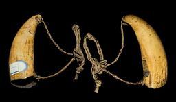 Dent de cachalot. Source : http://data.abuledu.org/URI/549de6b7-dent-de-cachalot