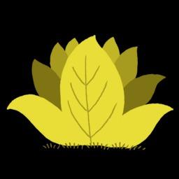 Dessin d'arbuste. Source : http://data.abuledu.org/URI/54f7894b-dessin-d-arbuste