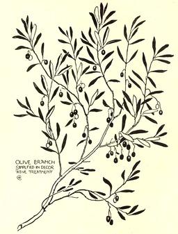Dessin de branche d'olivier. Source : http://data.abuledu.org/URI/565406cb-dessin-de-branche-d-olivier