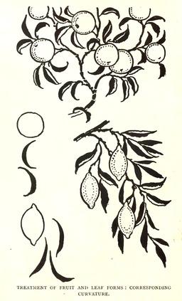 Dessin de branches d'oranger et de citronnier. Source : http://data.abuledu.org/URI/56543142-dessin-de-branches-d-oranger-et-de-citronnier