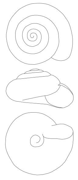 Dessin de coquille d'escargot. Source : http://data.abuledu.org/URI/538b9ed3-dessin-de-coquille-d-escargot