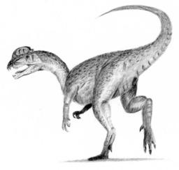 Dessin de Dilophosaurus. Source : http://data.abuledu.org/URI/512298ad-dessin-de-dilophosaurus