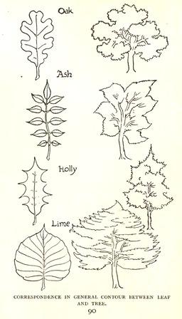 Dessin de feuilles d'arbres. Source : http://data.abuledu.org/URI/5654325a-dessin-de-feuilles-d-arbres