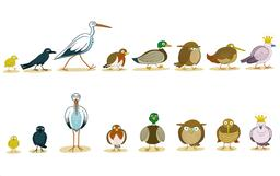 Dessin de huit oiseaux. Source : http://data.abuledu.org/URI/566b472f-dessin-de-huit-oiseaux