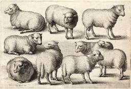 Dessin de neuf moutons. Source : http://data.abuledu.org/URI/54a1668b-dessin-de-neuf-moutons