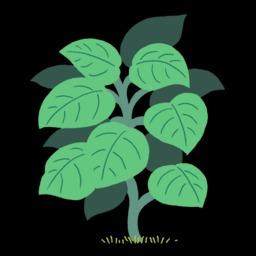 Dessin de plante grimpante verte. Source : http://data.abuledu.org/URI/54f78a1d-dessin-de-plante-grimpante-verte