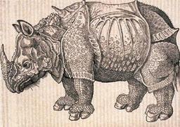 Dessin de rhinocéros. Source : http://data.abuledu.org/URI/5072a9c1-dessin-de-rhinoceros