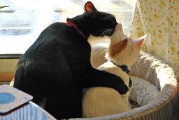 Deux chats dans leur panier. Source : http://data.abuledu.org/URI/503263b6-deux-chats-dans-leur-panier
