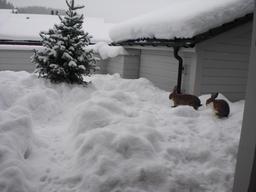Deux lapins dans la neige. Source : http://data.abuledu.org/URI/53063517-deux-lapins-dans-la-neige