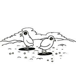 Deux poussins. Source : http://data.abuledu.org/URI/52d81aad-deux-poussins