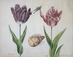 Deux tulipes, un coquillage et une sauterelle. Source : http://data.abuledu.org/URI/53efcf45-deux-tulipes-un-coquillage-et-une-sauterelle