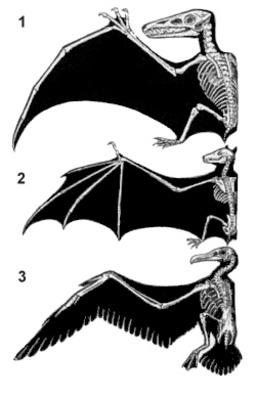 Différentes sortes d'ailes. Source : http://data.abuledu.org/URI/5022aa6d-differentes-sortes-d-ailes