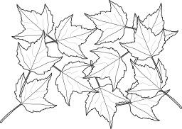 Douze feuilles d'érable. Source : http://data.abuledu.org/URI/5404333f-douze-feuilles-d-erable