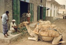 Dromadaires au marché de Bayt al Faqih, Yémen. Source : http://data.abuledu.org/URI/54d257be-dromadaires-au-marche-de-bayt-al-faqih-yemen