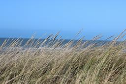Dunes du bord de mer. Source : http://data.abuledu.org/URI/59079d5e-dunes-du-bord-de-mer