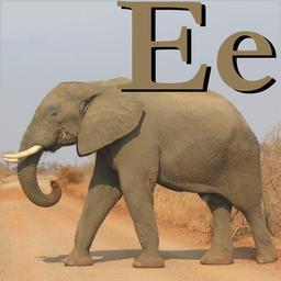 E pour l'éléphant. Source : http://data.abuledu.org/URI/5331fff8-e-pour-l-elephant