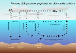 Échange air et mer de dioxyde de carbone. Source : http://data.abuledu.org/URI/5543aba3-echange-air-et-mer-de-dioxyde-de-carbone