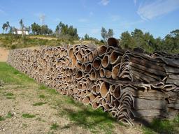 Écorces de liège. Source : http://data.abuledu.org/URI/51bc81a6-ecorces-de-liege