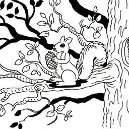 Écureuil dans un arbre. Source : http://data.abuledu.org/URI/52d728e1-ecureuil-dans-un-arbre