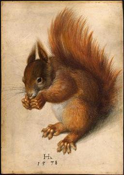 Écureuil roux. Source : http://data.abuledu.org/URI/506d6f23-ecureuil-roux