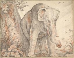 Éléphant se frottant contre un arbre. Source : http://data.abuledu.org/URI/573ad5a1-elephant-se-frottant-contre-un-arbre