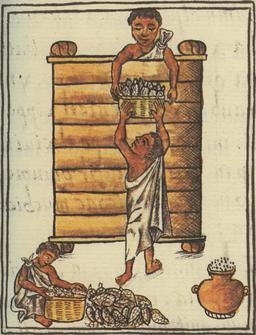 Ensilage du maïs par les Aztèques. Source : http://data.abuledu.org/URI/52889f75-ensilage-du-mais-par-les-azteques